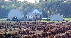 Amish Community Album at Columbia County Tourism .com!